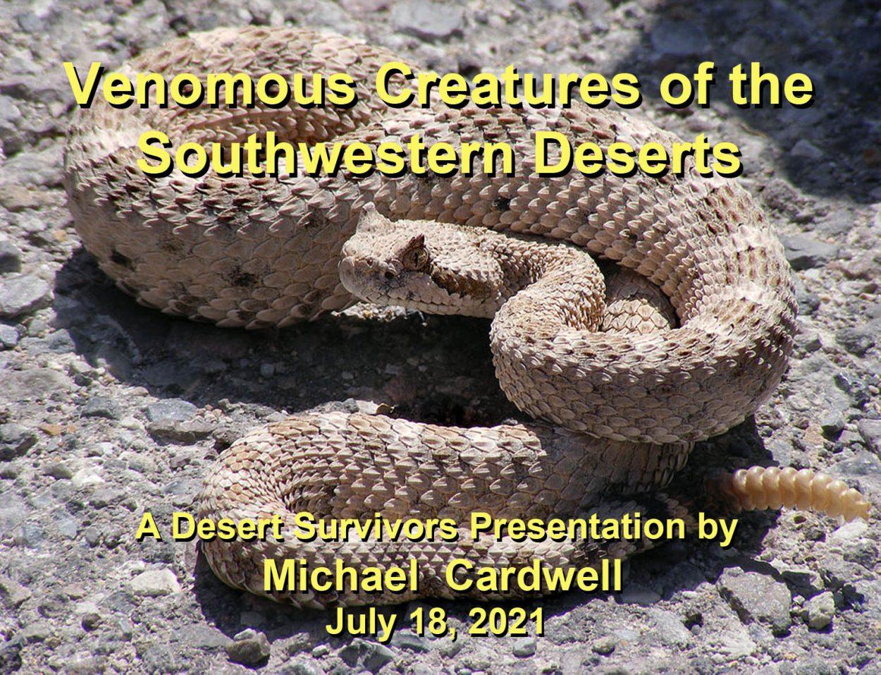 Venomous Desert Creatures Web Page C